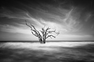 Edisto Island, South Carolina, Botany Bay, Tree, Black, White, Long exposure, Ivo Kerssemakers