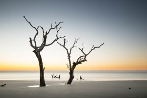 Bulls Island, Sunrise, South Carolina, Beach, Ocean, Trees, Tree, Ivo Kerssemakers