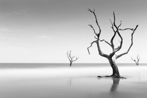 Bulls Island, Beach, Tree, Trees, Long Exposure,
