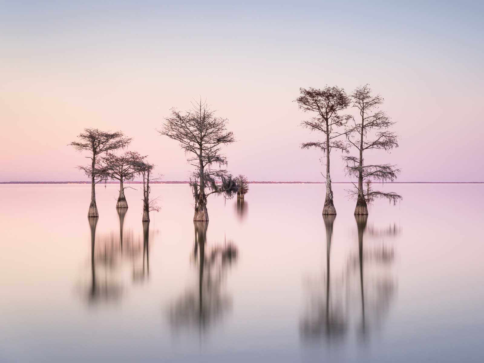 Ivo Kerssemakers, Winter Cypress IX, Limited Edition, up to 95x40