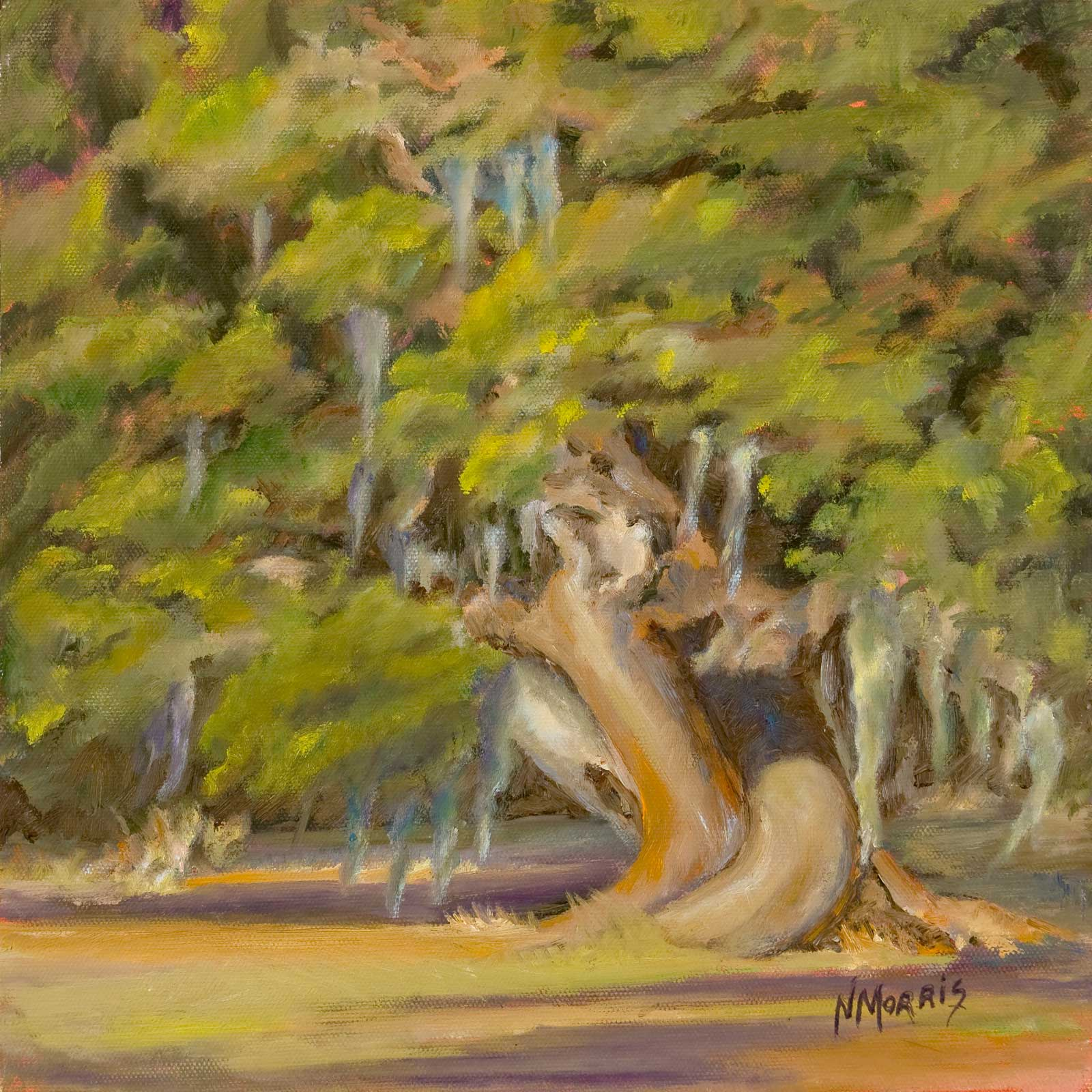 Norma Morris Cable, Twisted Oak of Magnolia, 12x12-oil