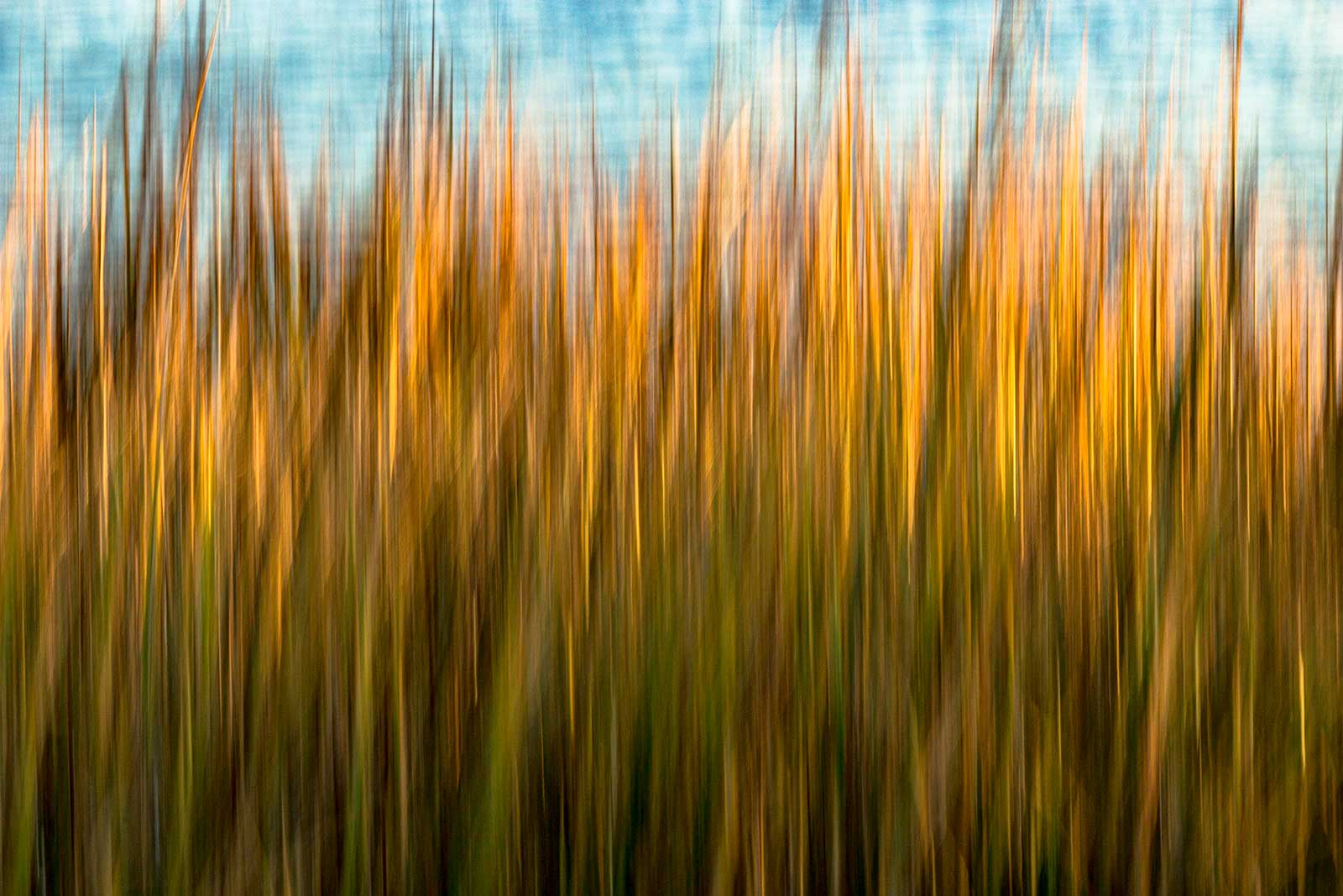 Nicole Robinson, Folly Grass, Limited Edition, up to 60x40