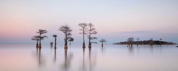 Ivo Kerssemakers, Winter Cypress V, Limited Edition, up to 72x40