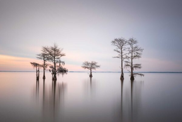 Ivo Kerssemakers, Winter Cypress VIII, Limited Edition, up to 72x40