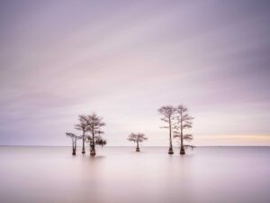 Ivo Kerssemakers Winter Cypress IX Photography