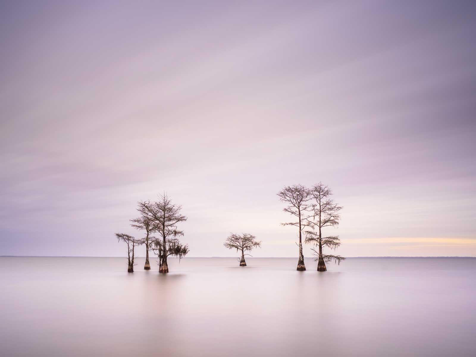 Ivo Kerssemakers Winter Cypress IX Photography