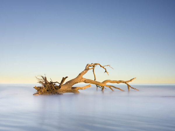 Art print of a fallen tree on Hunting Island, South Carolina by Ivo Kerssemakers